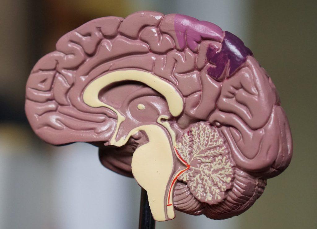 Bienvenidos al neuromarketing: de racionales tenemos poco